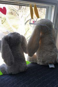 bunny hop bunnies